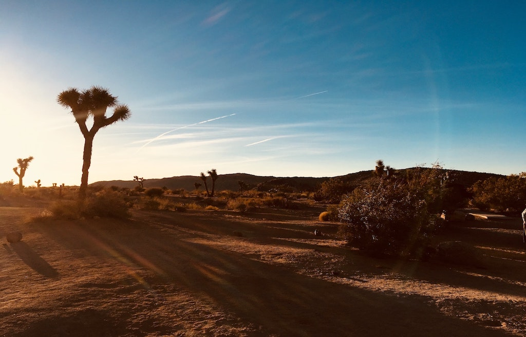 RV campgrounds in Joshua Tree